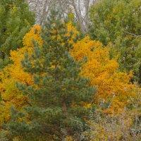 осень спряталась за елью... :: Алексей Бортновский