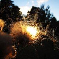 Солнечная перина :: Лариса Чудиновских
