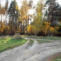 Завтра придет унылая осень :: Игорь Юсов