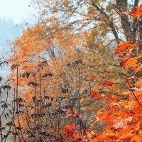 Краски осени :: Sheri Day