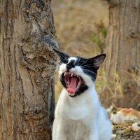 кошки Туниса (жрать даваааай!) :: Евгений Фролов