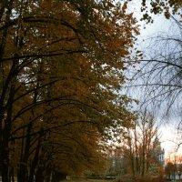 Вечерний парк :: Владимир Д