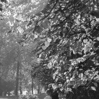 Осенняя грусть :: Сергей Тагиров