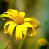 цветик семицветик :: Кристина Громова