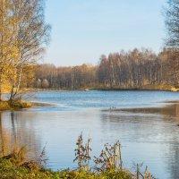 Прозрачная осень :: Виталий