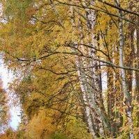 Золотая осень :: Ольга