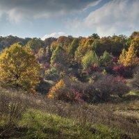 Осенний колорит :: Лидия Цапко