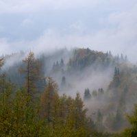 Дождливый день в Карпатах :: Александр Крупский