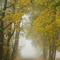 Портал в Осень :: Svetlana Kravchenko