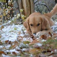 Немного первого снега... :: Елена Рекк