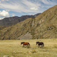 Лошадки в Горах Алтая :: И.В.К. ))