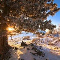 На горы зимние, взор Ваш, пусть неутомимым будет 8 :: Сергей Жуков