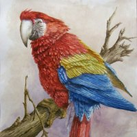 Попугай :: rv76