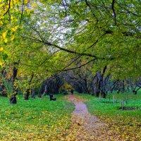 Осень в Коломенском. :: Сергей Басов