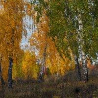В октябре. :: Сергей Адигамов