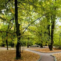 Английский парк. :: Николай Сидаш