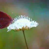 butterfly :: Антон Лихач