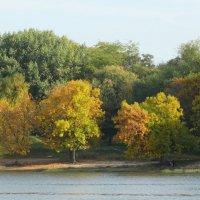 Пришла Золотая осень... :: Тамара (st.tamara)