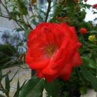 Цветы Сочи :: Наиля