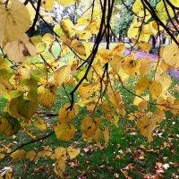 Шатер из осенних листьев... :: Марина Харченкова