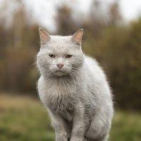 Кот осенний :: Владимир Горубин