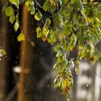 Дождь :: Александр