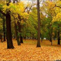Золотая осень :: °•●Елена●•° Аникина♀