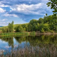 Лесное озеро :: Ольга