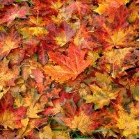 Ковер из осенних листьев :: НАТАЛИ natali-t8
