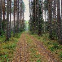 В осеннем лесу :: Павлова Татьяна Павлова