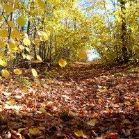 Осень золотая :: Андрей Заломленков