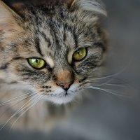 О чём думают коты? :: Лилия .