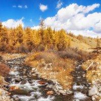 Золотая осень алтайских гор.... :: Галина Шепелева