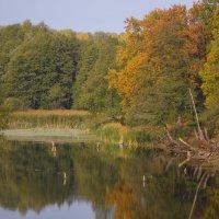 Осеннее озерцо :: Сергей Тагиров