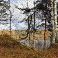 Золотая осень. :: Андрей Вычегодский