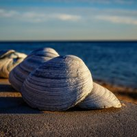 Морской натюрморт... :: Арина