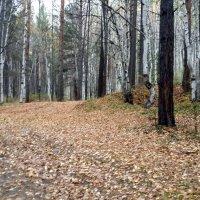 Осенний лес :: Наталья Тимофеева