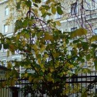 Осень в Монастырском саду. (Санкт-Петербург). :: Светлана Калмыкова