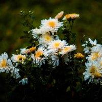 осень в мое саду. :: Валерий Гудков