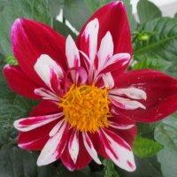 Осенние цветы... :: Valentina