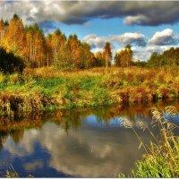 Позолотила березки осень :: Вячеслав Минаев