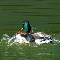 Попотеть, конечно, нужно, чтобы плавать стилем брасс! :: Наталья