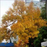 Солнечное дерево в нашем дворе :: Нина Корешкова