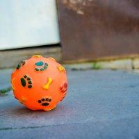 мячик нашей собаки :: Света Кондрашова