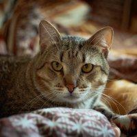Портрет котика Сони) :: Дмитрий