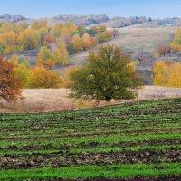 Гуляла осень по холмам :: Любовь Потеряхина