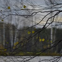 Осенний остров.... :: Юрий Цыплятников