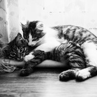 Hugs :: Мария Крючкова