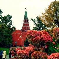 Aleksandrovski сад :: Йована Марьянович