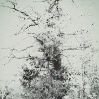 Дерево :: Taisia_ZX